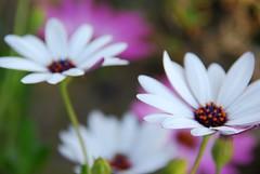 SOOC!!! I did it!!! :-P (...-Wink-...) Tags: california flowers wild sun green nature garden flora explore bloom ventura 46 interestingness45 nikond80 sigma18200hsmos
