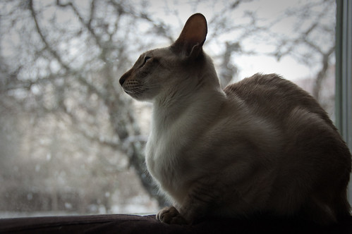 Ismo watching the snow