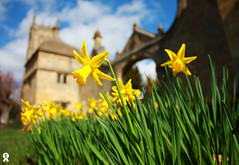 Coming up in the Cotswolds (Rich007) Tags: old uk greatbritain flowers blue england sun flower colour green church yellow stone spring gate europe village unitedkingdom britain cotswolds villages gloucestershire historic lodge civilwar daffodil gb getty daffodils gettyimages stjameschurch chippingcampden gatehouse cotswold gloucs woolchurch campdenhouse sirbaptisthicks campdenmanor