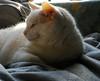 Day 3 Miss My Kitty (Gail S) Tags: cat kitty thepuss catsandwindows
