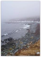 Ragged Beach (Jean Knowles) Tags: ocean winter snow seaweed cold beach water fog newfoundland rocks waves atlantic shore arr coastline southside geotag rugged allrightsreserved southernshore witlessbay newfoundlandandlabrador landwash nottobeusedwithoutmypermission raggedbeach 2009jeanknowles engineeringserendipity
