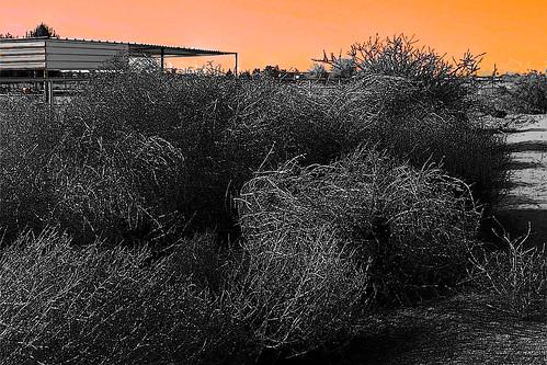 Tumbleweedspopped