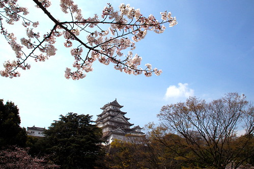 Himeji Castle with cherry trees