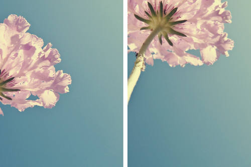 april0709_diptych