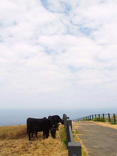 八丈富士の牧場