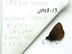 Erebia pharte