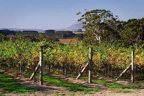 Hesket, Victoria, Australia, winery IMG_3243_Hesket