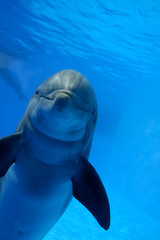 Dolphin (Eldad Hagar (Please support Hope For Paws)) Tags: dolphin dolphins animalrescue eldadhagar hopeforpaws