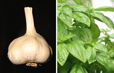 garlicbasil
