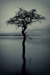 my favourite tree (ben matthews :::) Tags: reflection tree scotland ripple scottishloch