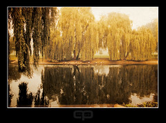 Willow waters (Gary*) Tags: old morning mist lake history texture nature water fog reflections dawn countryside peace memories canvas willows lovephotography 40d vosplusbellesphotos mansevilprogress