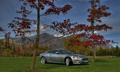 j8 (stevemullan) Tags: trees grass aluminum jaguar v8 xk