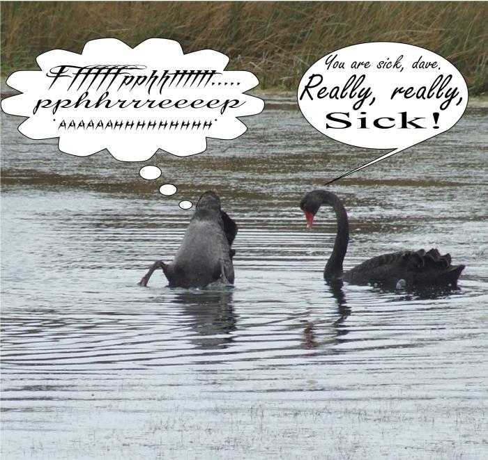 farting black swan