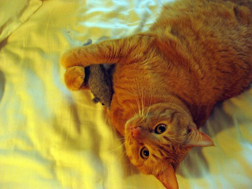 bob loves his mousy