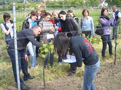 Im Weingarten bei Hahnekamp-Sailer, Großhöflein, Neusiedlersee-Hügelland