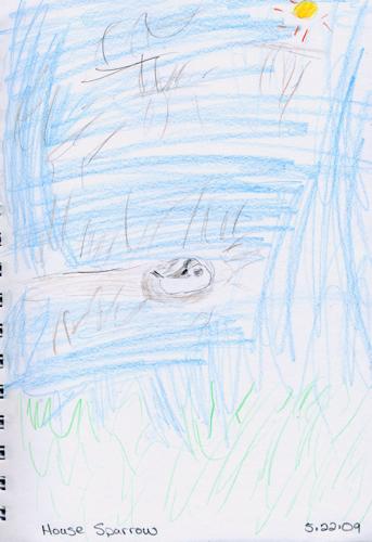 House Sparrow by JD Boy (age 6)