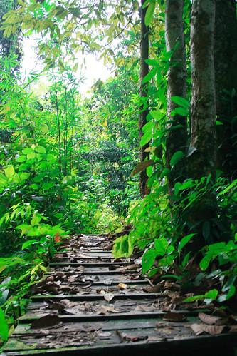 Asian Tropical Rainforest 46