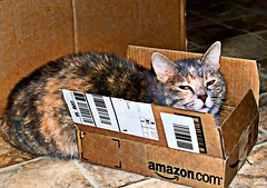 Missy Finds a New Box (Jeanette Runyon) Tags: cats tag3 taggedout cat feline tag2 tag1 digitalart kittyschoice sonyalphadslra200