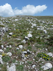 Flowers on Galicica (jelisaveta21) Tags: wild mountain plant flower clouds garden landscape walk macedonia summit mcct landscapeshotinportraitformat