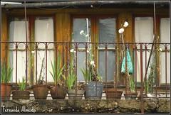 Sertã (Fernanda Almeida 2008) Tags: portugal branco plantas castelo janelas vasos varanda sertã ilustarportugal