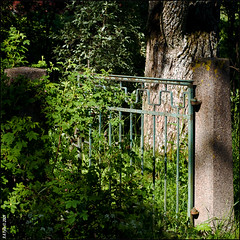 Summer Gate (R A Pyke (SweRon)) Tags: summer tree leaves concrete rust gate iron mood olympus trunk feeling posts omzuiko50mmf18 e410 sweron