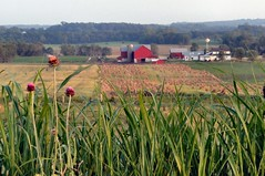 Amish Farm in the Distance (cindy47452) Tags: house windmill barn rural weeds farm thistle indiana amish fields crops farmer orangecounty oldorder ibeauty p181 sansogm gentechnikfrei dschx1 gmofreeworld