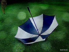 Her umbrella was filled with rain she collected on her travels & on hot summer days she would open it up & it would smell of places we had never seen like Nairobi & Tasmania & we would sit on the porch till dusk & watch for tigers in the bushes. (223/365) (LittleRedCera) Tags: blackandwhite umbrella bokeh 2009 storypeople june29 hardrain tigerrain swimmingintheether littleredcera textureuse