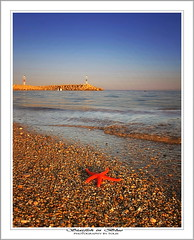 Starfish & Peebles (tolis*) Tags: blue red summer beach canon island starfish greece shore peebles tamron chios komi 50d eos50d tolis   flioukas 18270vc thepowerofnow