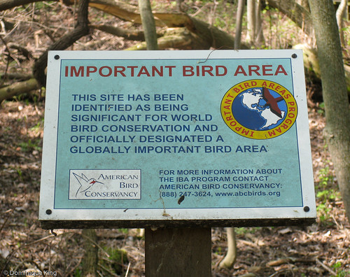 Magee Marsh, Ohio wildlife refuge-2