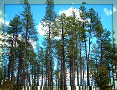 Flagstaff arizona (Molly258) Tags: soe digitalcameraclub amomentarylapseofreason natureonitsbest betterthangood flickrroseawards shieldodexcellence