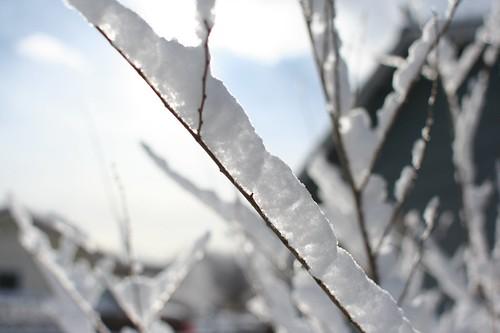 March Snowfall