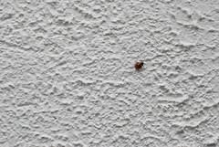 na pustkowiu bieli, na bezdroach muru (p.lorenc) Tags: lilla lorencowie