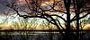 Winter (PJSherris) Tags: trees winter sunset sky ice water bay olympus longisland olympusc4040z eatonsneck