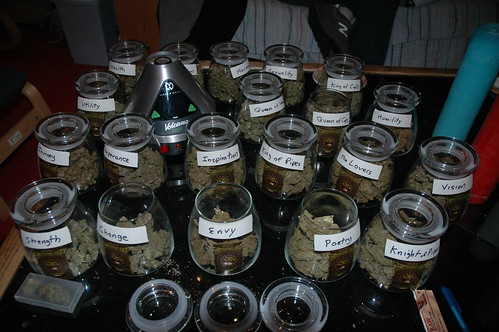 different strains of cannabis