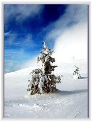 white beauty (FriaLOve) Tags: blue light sky white mountain snow green up clouds finland high wind lapland fir soe fell firtree fjeld schooltrip bej worldwidelandscapes vosplusbellesphotos ubej thebestofmimamorsgroups frialove