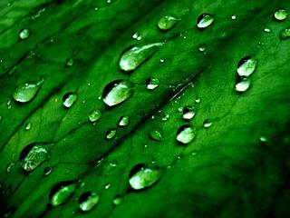 Dew drops..