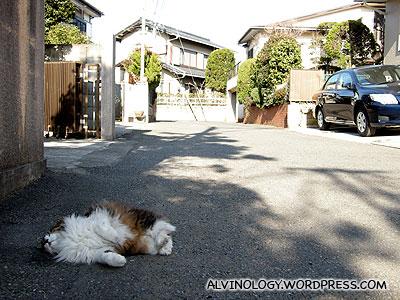 Lazy cat twisting around under the sun