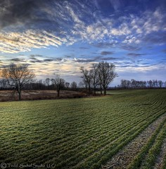 Green Grass and Blue Skies (tsechel) Tags: morning trees light ohio field grass lines rural farm rows handheld blueskies hdr vermilion greengrass eriecounty postsunrise 1stattempt 6exposure krishlikesit vertorama vosplusbellesphotos updatecollection