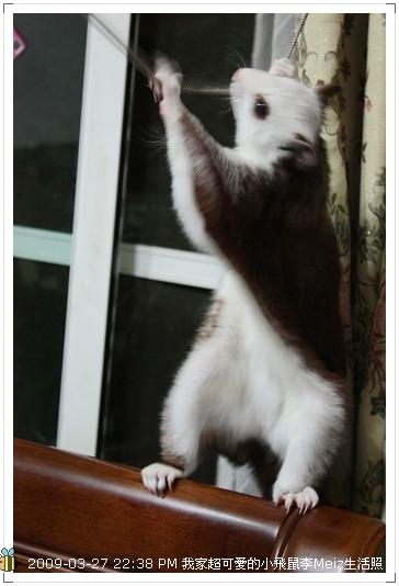 09年二三月小飛鼠Meiz生活照 (28)