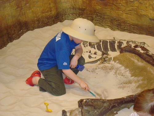 Digging Up Fossils
