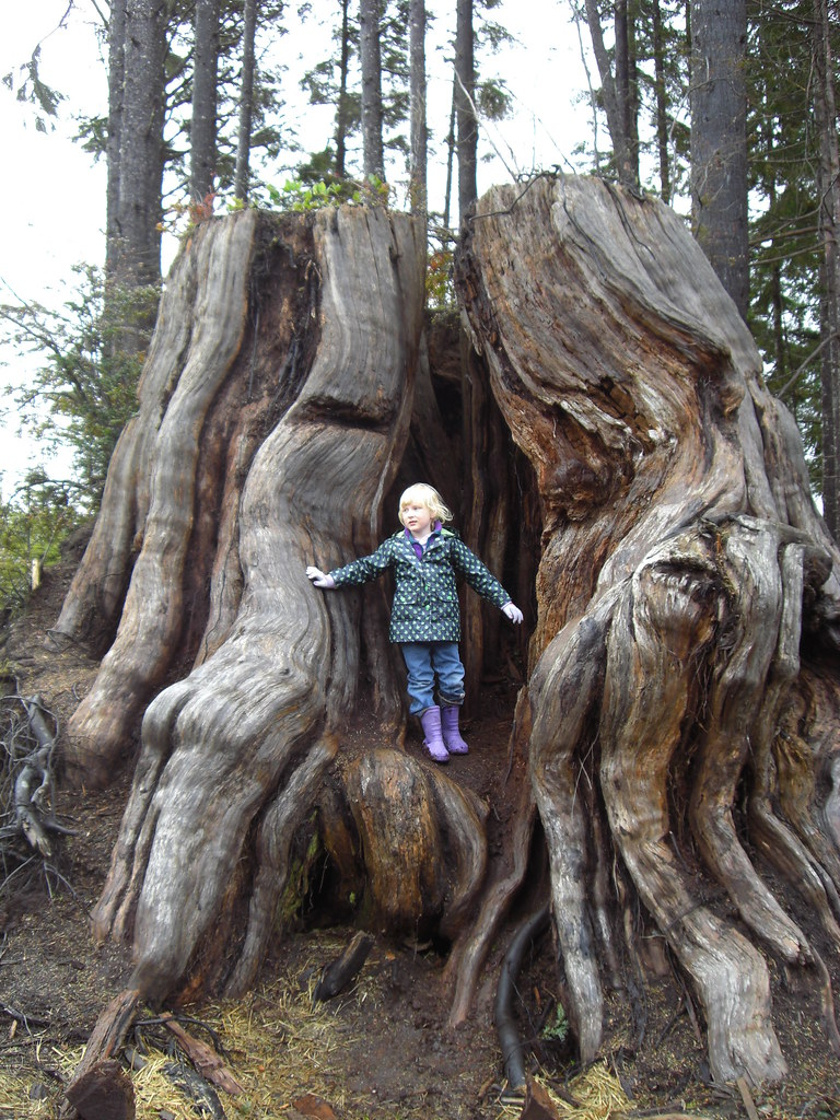 Girl in stump