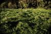 Verde en San Andrés de Teixido