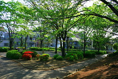 parc (chihilo) Tags: light shadow flower color tree fleur japan canon afternoon ombre lumiere    arbre parc japon couleur slope   machida
