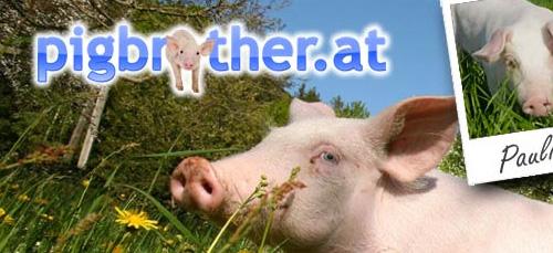 pigbrother