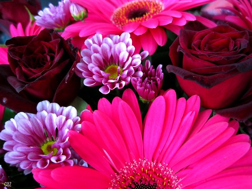 Daisies and Roses and Gerberas Oh My!