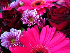 Daisies and Roses and Gerberas Oh My! (-caz-) Tags: pink flowers red roses flower rose daisies pretty purple magenta explore gerbera bunch daisy bouquet anzac gerberas anzacday
