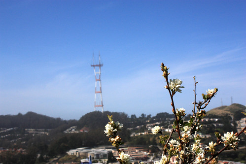 Sutro Tower from Mt Davidson