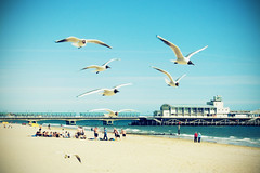 The Great British Holiday - Gulls of the Pier (Daniel Hodson) Tags: uk dan beach canon seaside unitedkingdom daniel aib peter queue promenade dorset takeaway canoneos350d bournemouth freelance hodson visualcommunication britishholiday fbdg artsinstitutebournemouth danielpeterhodson danielhodson theartsinstitutebournemouth httpwwwdanielhodsoncouk professionalproject
