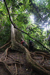 Tualang (izamree) Tags: park rescue forest team walk national jungle malaysia guide canopy taman pahang negara jabatan kanopi perhilitan