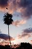 Augury (nosha) Tags: blue sunset red vacation cloud holiday tree bird nature beautiful beauty clouds mexico nikon f10 palm jungle palmtree april 24mm 2009 avian lightroom blackmagic d40 nosha augury 18200mmf3556 yuccatan april2009 nikond40
